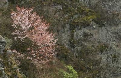 200404-24.jpg