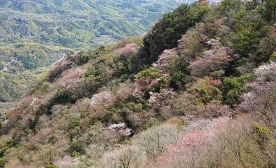 200411-07.jpg