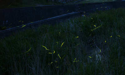 olive110603d.jpg